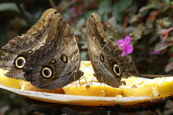 c15-cali-colombia_butterflies_pixabay