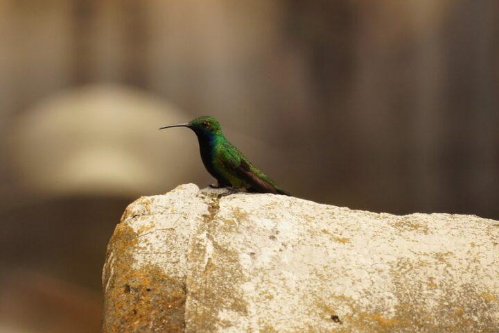c16-cali-colombia_birds_pixabay