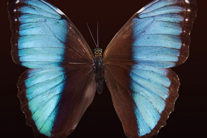c18-cali-colombia_butterfly_pixabay