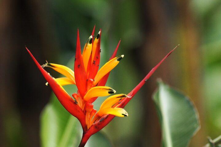 ca017-cartagena-colombia_nature_pixabay