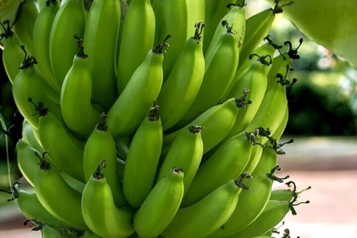 ca020-cartagena-bananas_pixabay